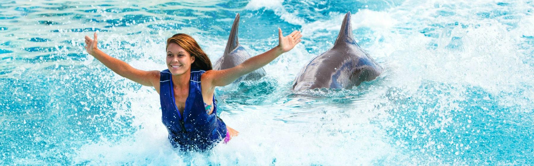Sea Life Park Hawaii Dolphin Royal Swim Photo
