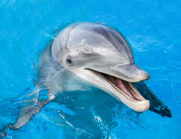 SeaLifePark Dolphin