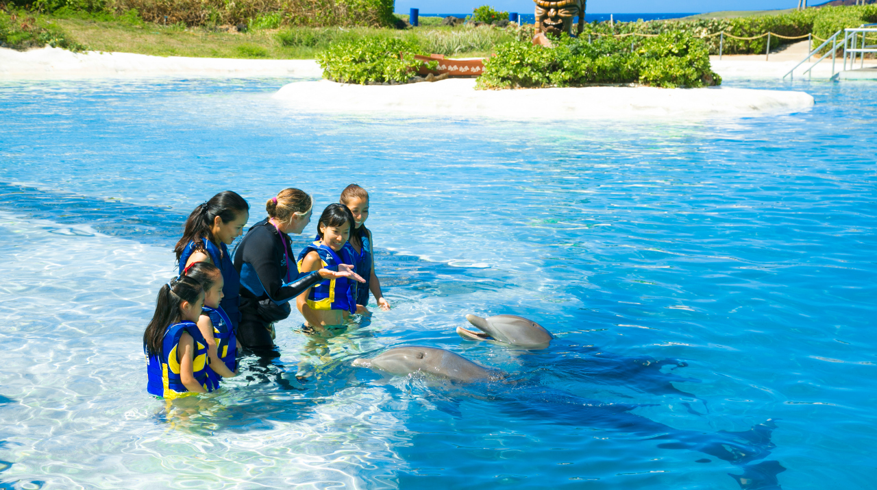 Dolphin Encounter photo