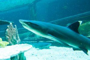 SeaLifeParkHawaii Shark