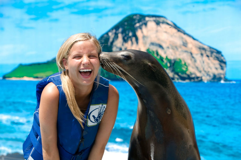 Sea Lion Encounter photo