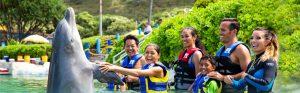 シーライフ・パーク・ハワイでイルカと触れ合う人々