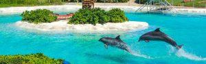 Sea Life Park Dolphin Swim