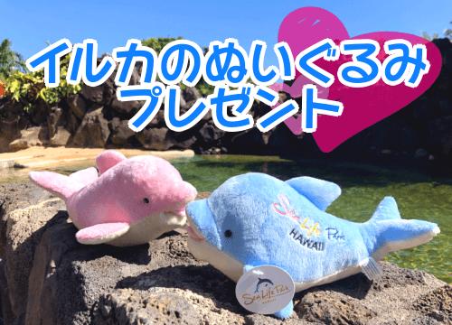 イルカのぬいぐるみプレゼントキャンペーン